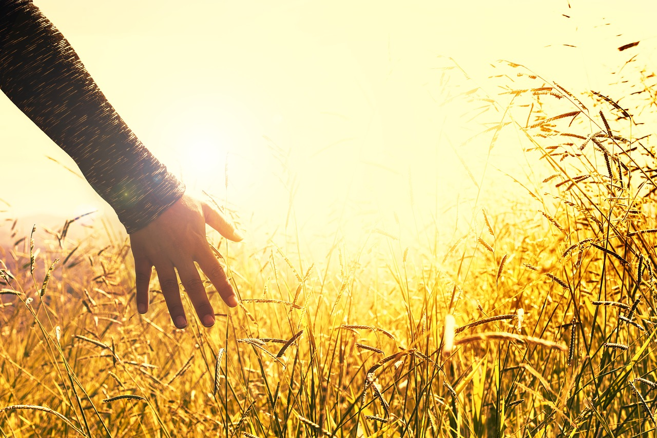 Hand touching wheat fields of gold and reflection about God