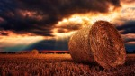 The harvest time is a time where consequences follow. This image of a farm harvest represents this theme - farm, bale of hay and field.